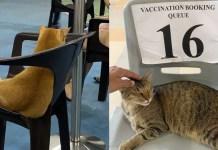 Cat vax CC