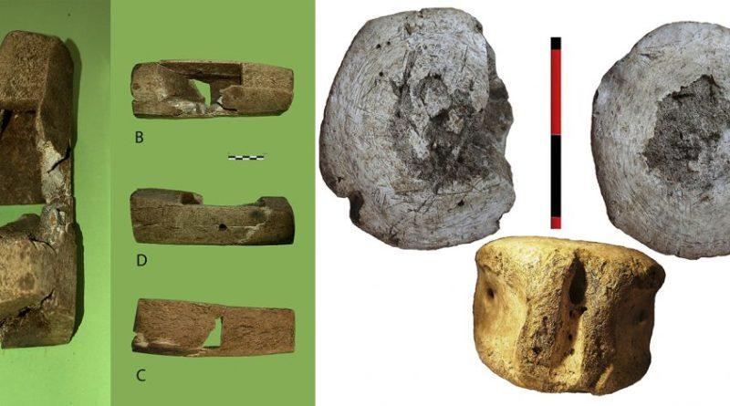 Investigadores de la UCA participan en el hallazgo de restos de dos especies de ballenas desaparecidas en el Mediterráneo