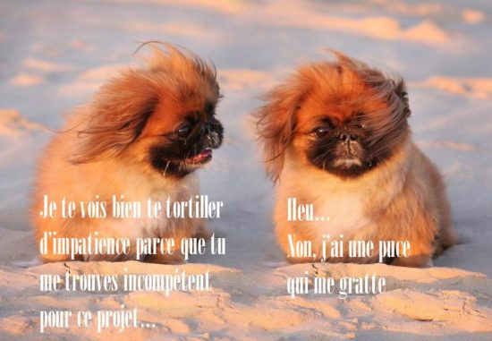 conversation entre deux petits chiens