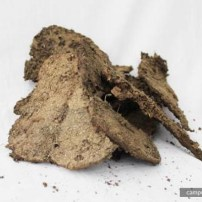Dried-Cow-Dung
