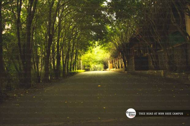 tree-road-nbn-ssoe-campus-images