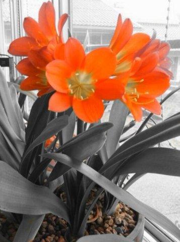 C360_2012-04-13-16-15-22-1.jpg