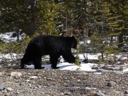 cs-alberta-wildlife-4