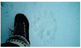 Within an hour of our arrival in Churchill we found fresh polar bear tracks just miles from the airport.