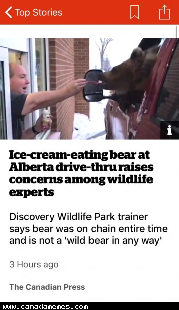 Imagine working at the drive-thru and a bear shows up looking for an ice-cream
