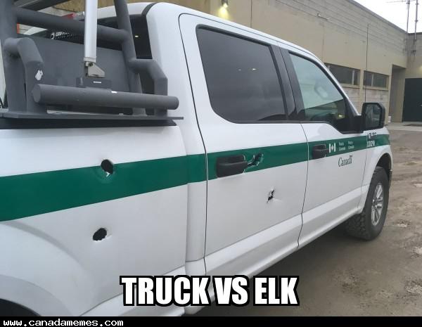 🇨🇦 Truck vs Elk