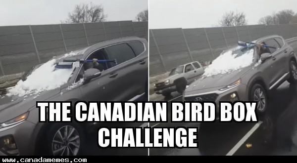 🇨🇦 The Canadian Bird Box challenge