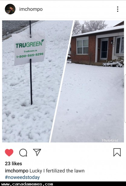 🇨🇦 Lucky I fertilized the lawn...