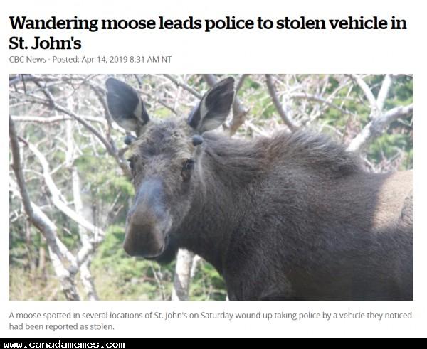 🇨🇦 Inspector Moose Cracks the Case