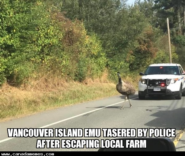 🇨🇦 Meanwhile on Vancouver Island...