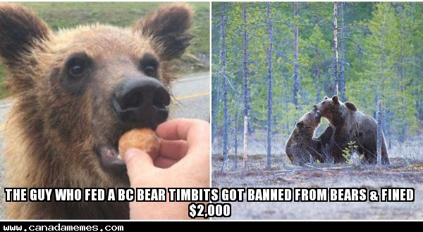 🇨🇦 Update: The Guy Who Fed A BC Bear Timbits Got Banned From Bears & Fined $2,000