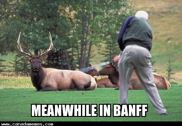 🇨🇦 Elk is totally judging his golf swing