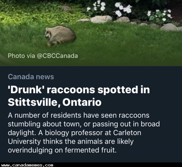 """🇨🇦 I've been known to overindulge on """"fermented fruit"""" too..."""