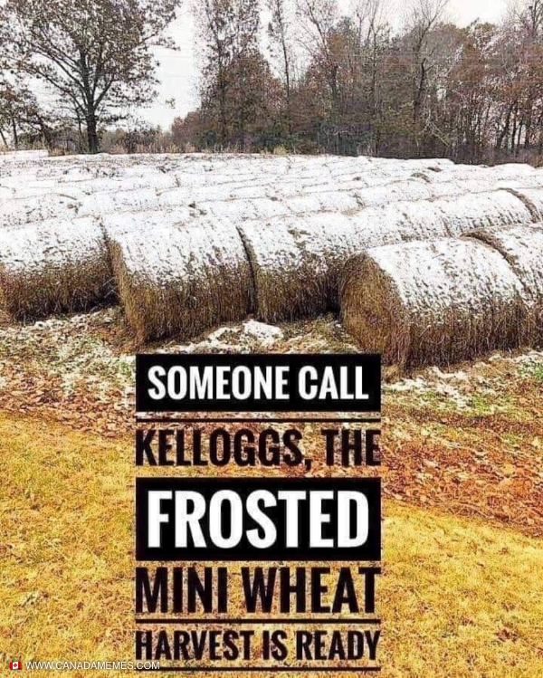 The Frosted mini-wheats ready!