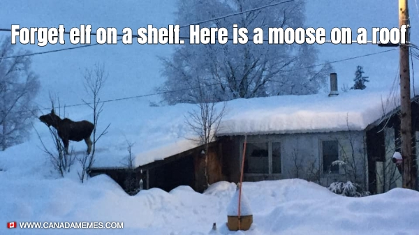 Forget elf on a shelf. Here is a moose on a roof