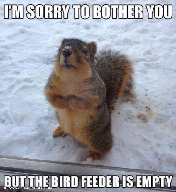 I'm sorry to bother you...