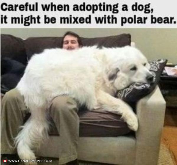Part dog part polar bear