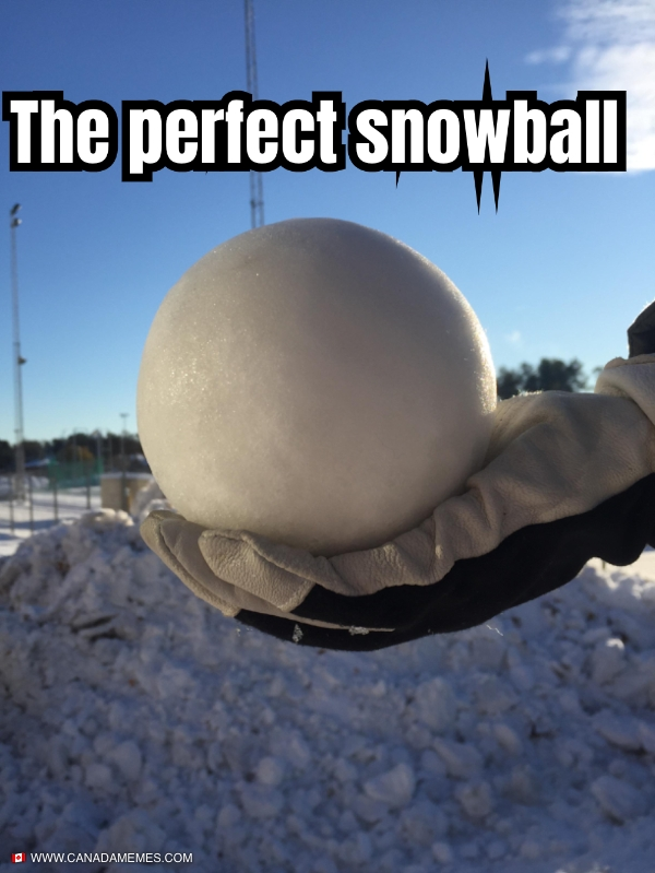 Stop what you're doing and appreciate this perfect snowbal