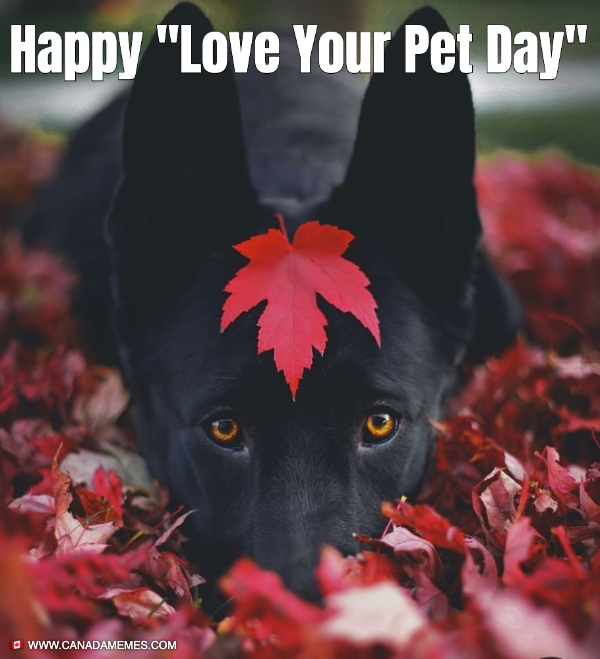 "Happy ""Love Your Pet Day"""