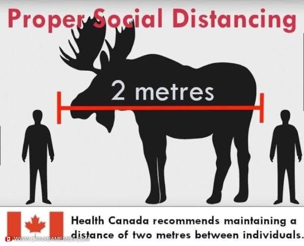 Keep at least 1 moose apart!