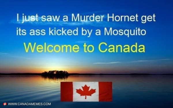 Murder hornets got nothing against our mosquitos!