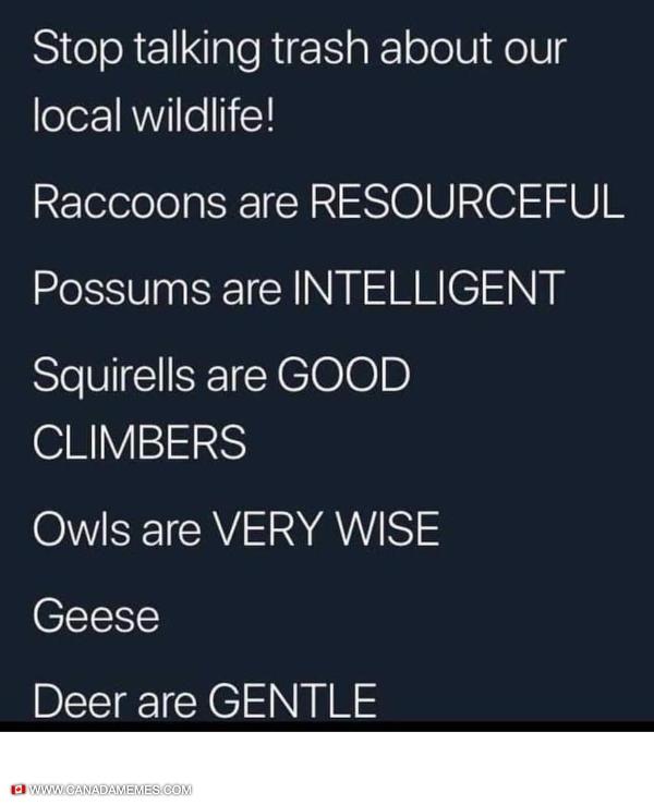 Canada's majestic wildlife
