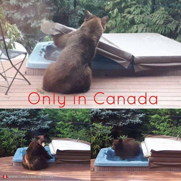Caught Bear Handed