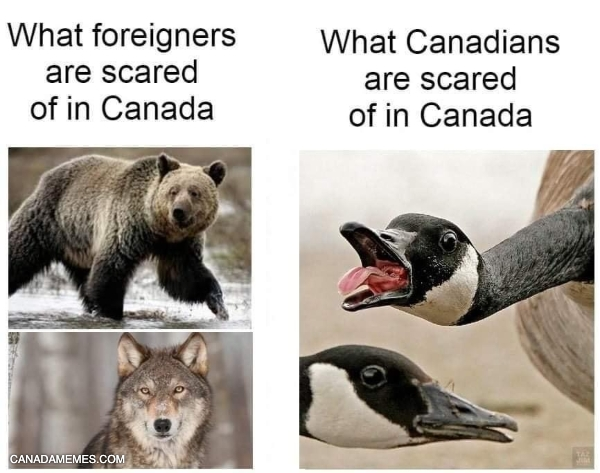 What Canadian are scared of