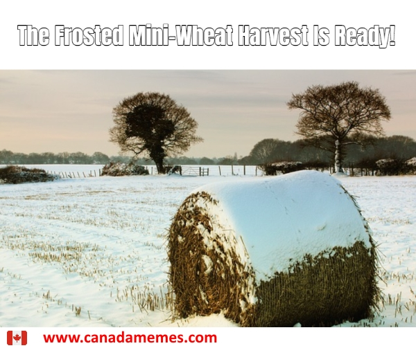 The Frosted Mini-Wheat Harvest Is Ready!