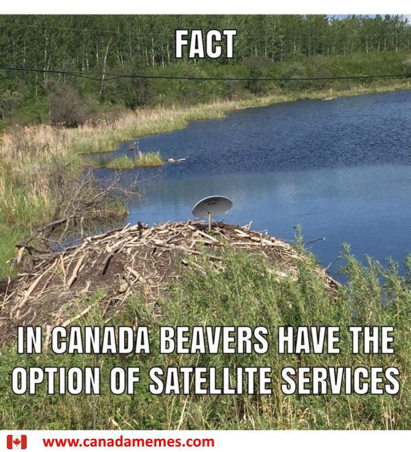 Beaver facts