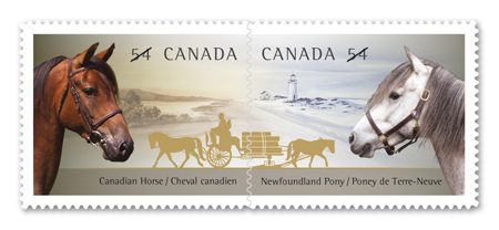 The Canadian Horse and the Newfoundland Pony