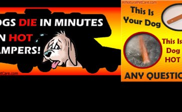 WARNING! Dogs Die in Hot Cars & Campers