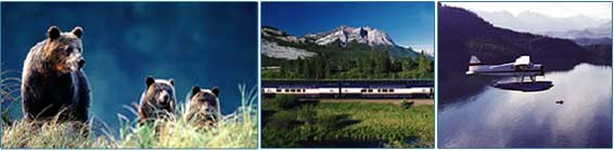 Trains, Planes and Grizzly Bears