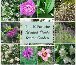 Gardening – 10 of the Best Smelling Plants