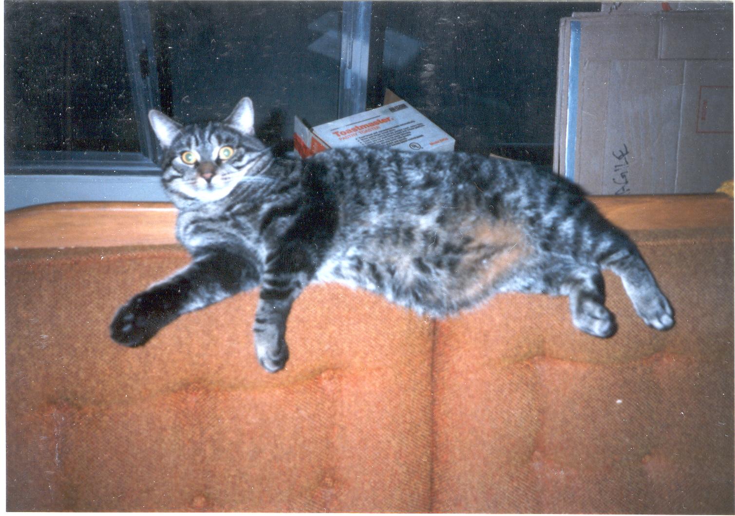 Not Really an Ottawa Fat Cat
