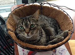 Cats can make you a basket case with their vet bills