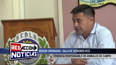Photo of Redacción Noticias |  TENECIA RESPONSABLE DE ANIMALES DE CAMPO – HCD – LAS HERAS SANTA CRUZ
