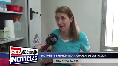 Photo of Redacción Noticias |  ZOONOSIS SE REANUDAN LAS JORNADAS DE CASTRACION – LAS HERAS SANTA CRUZ