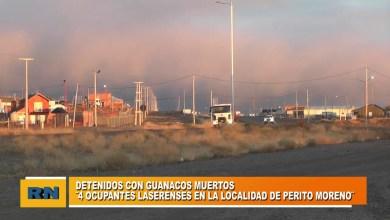 Photo of Redacción Noticias |  4 DETENIDOS LASERENSE CON GUANACOS MUERTOS