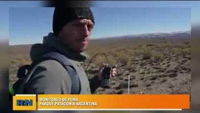 Photo of Redacción Noticias    Monitoreo de pumas en Parque Patagonia