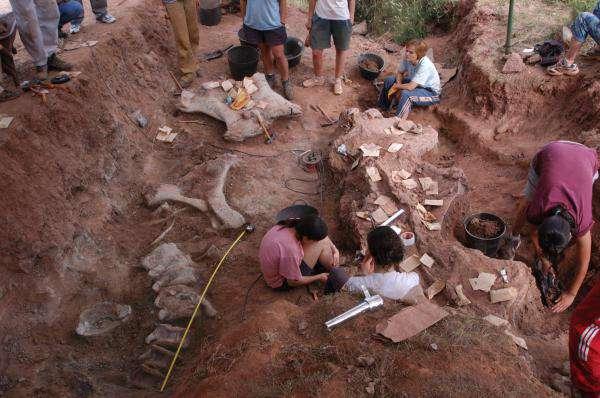 Investigadores analizan en Salas un gran cuello de dinosaurio