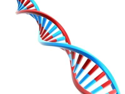 Representación gráfica de una doble hélice de ADN
