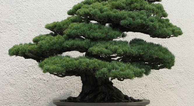 PULSANO: WORKSHOP E MOSTRA DI BONSAI