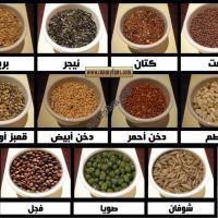 نصائح في التغذية السليمة للكناري - د. عبده أبو سير