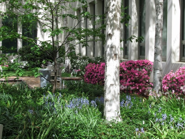 Parliament House Courtyard Gardens in spring… | Canberra\'s Green Spaces