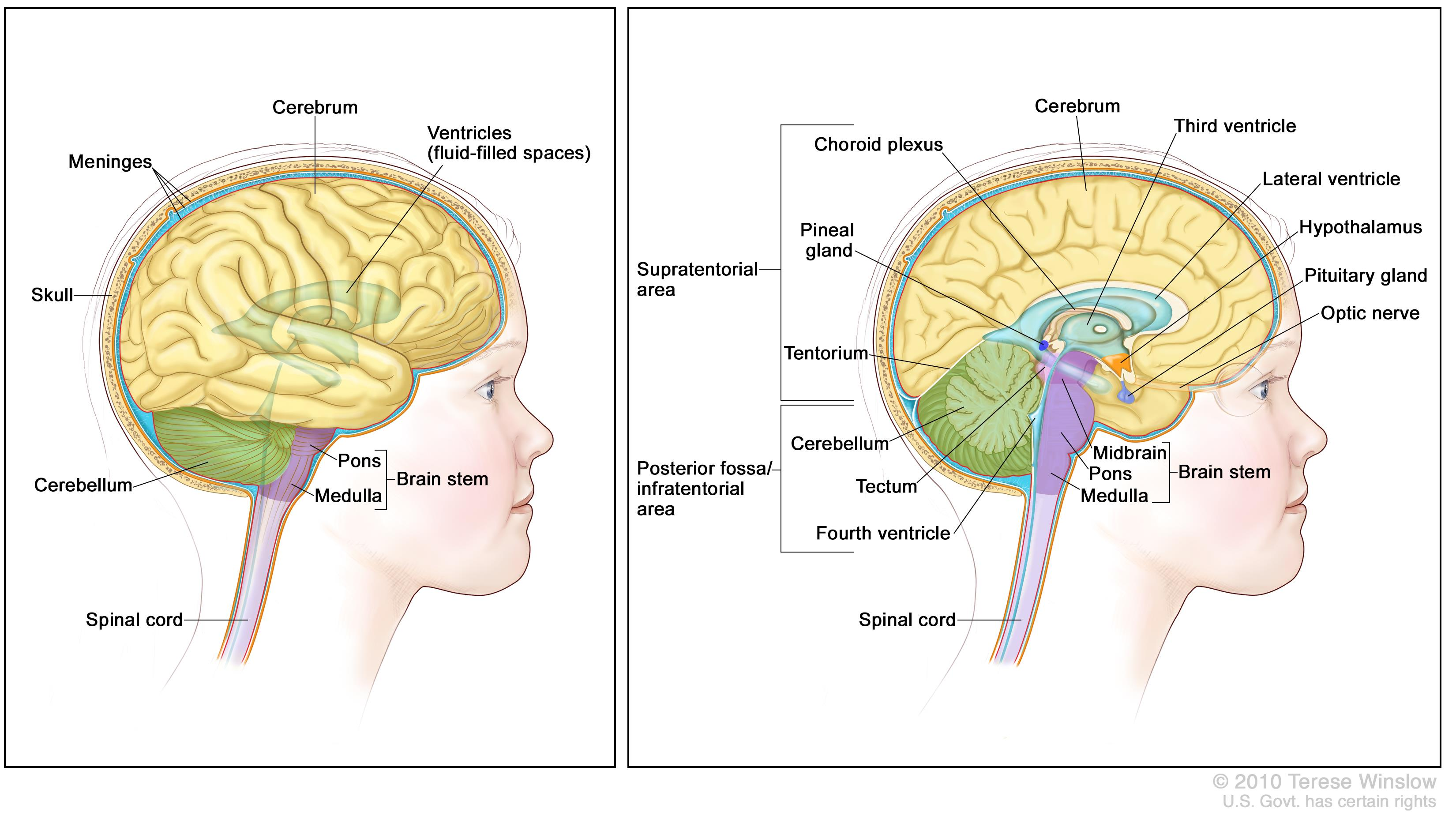 Childhood Brain And Spinal Cord Tumors Treatment Overview