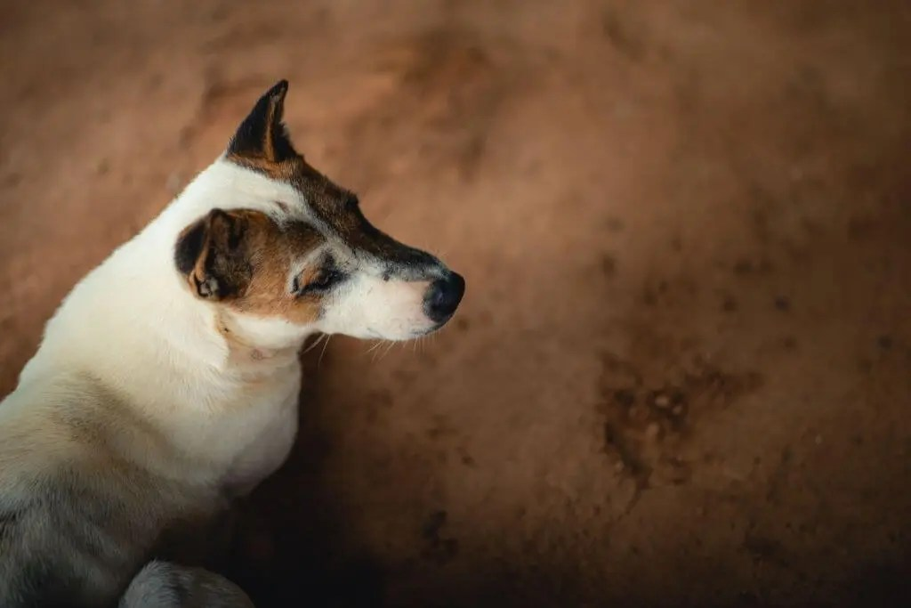 dogs can detect cancer in humans
