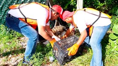 Photo of Encabeza @juancarrillo58 jornada de limpieza en la Salina Chica