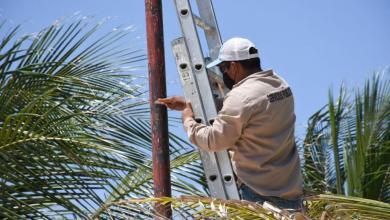 Photo of Realizan rehabilitación de luminarias y postes en Puerto Morelos