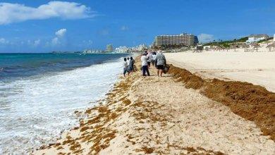 Photo of Atienden recale de sargazo en Cancún